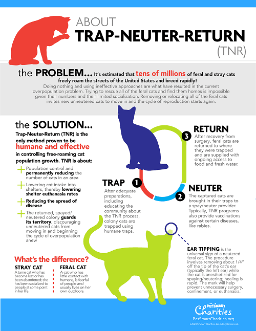 PetSmart TNR_Infographic_English
