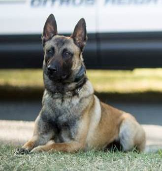 K9 Unit | Citrus Heights, CA -...